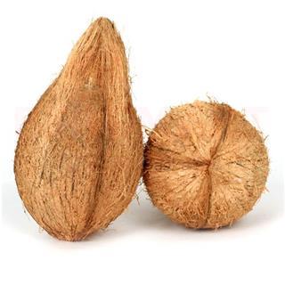 Coconut Large (1 pcs)