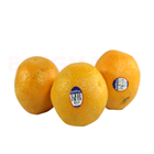 Orange Kinnow (Grade1) (6 pcs)