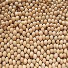 Vatana White (500 gm)